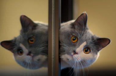 Nice Cute Kitten