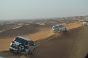 Nice Safari Desert
