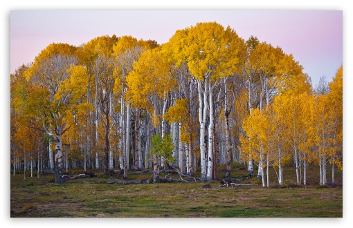 Nice Yellow Tree