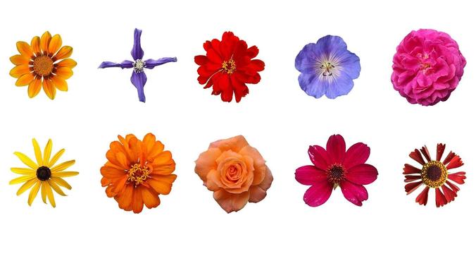 Nice 3D Flower
