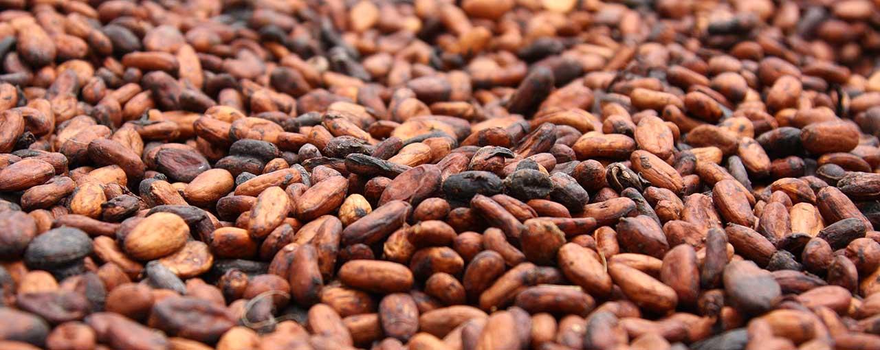 Free Cocoa Image