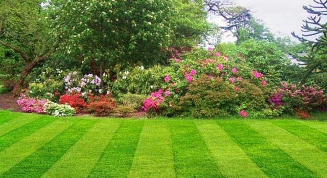 Natural Garden Image