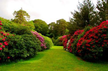 Nice Garden Image