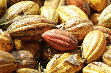 Top Cocoa Image 20060