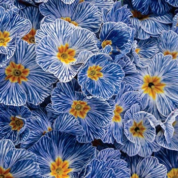 Free Primrose Blue
