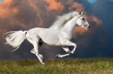 Free White Horse