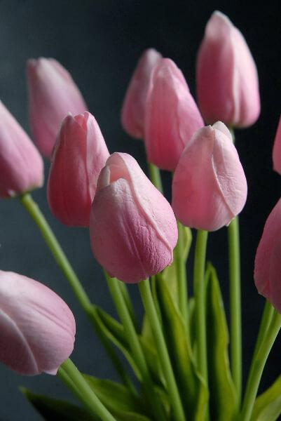 Nice Pink Tulip
