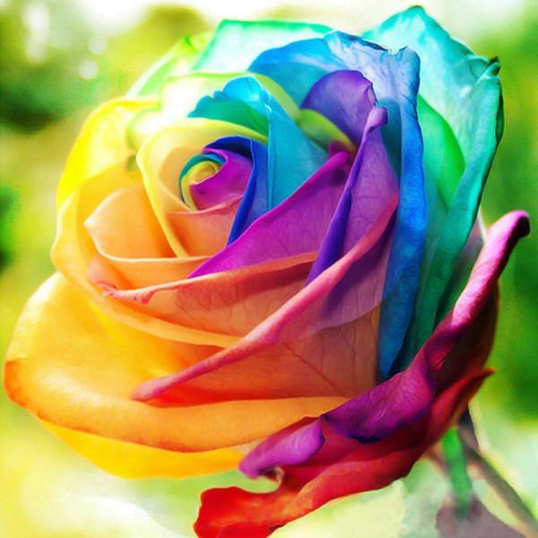 Top Rainbow Rose