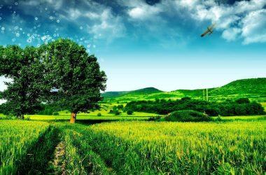 Widescreen Landscape Wallpaper 21807
