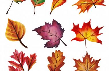 HD Autumn Leaves 21825