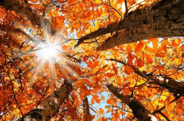 Beautiful Autumn 22540