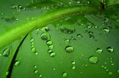 Free Dew on Leaves 22491