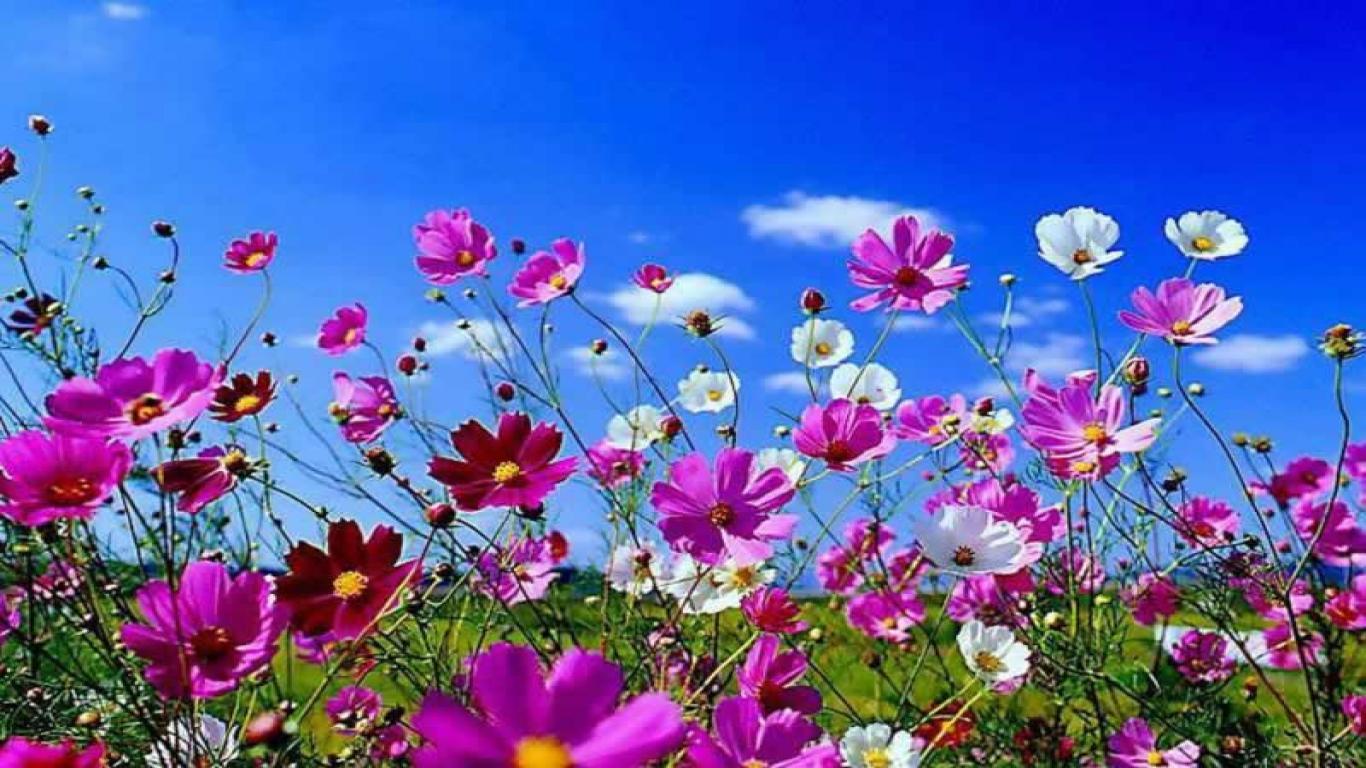 Landscape HD Spring