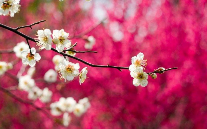 Nice HD Spring