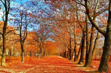 Widescreen Autumn 22547