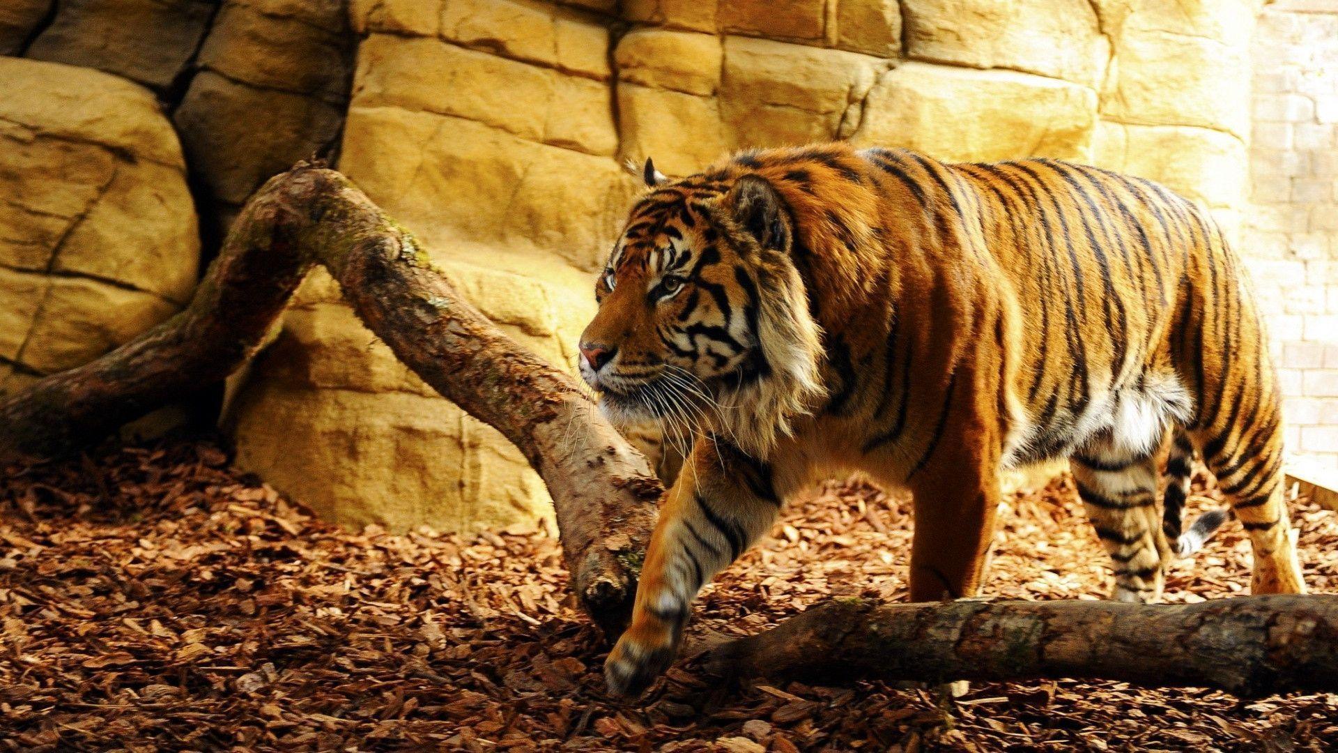 Wonderful Tiger Wallpaper