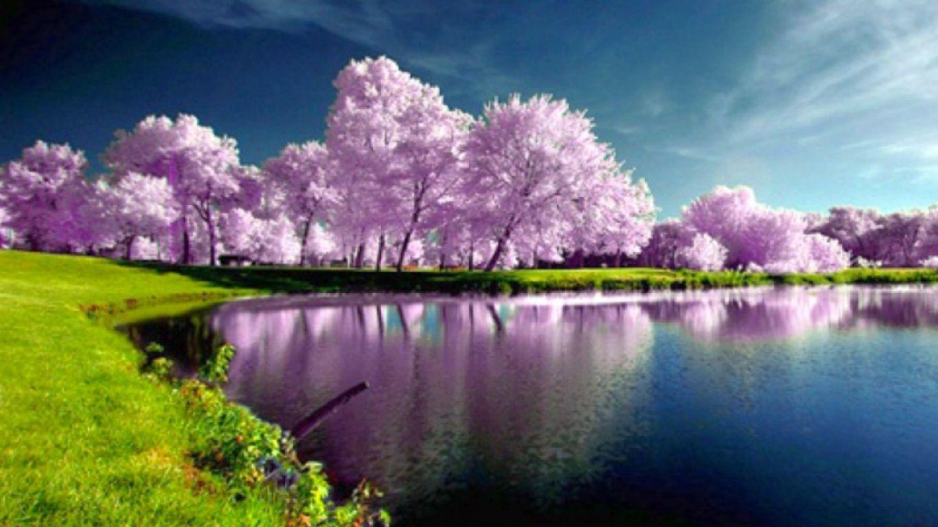 Purple Spring Image