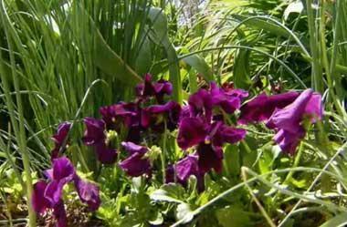 Beautiful Spring Flowers 24507