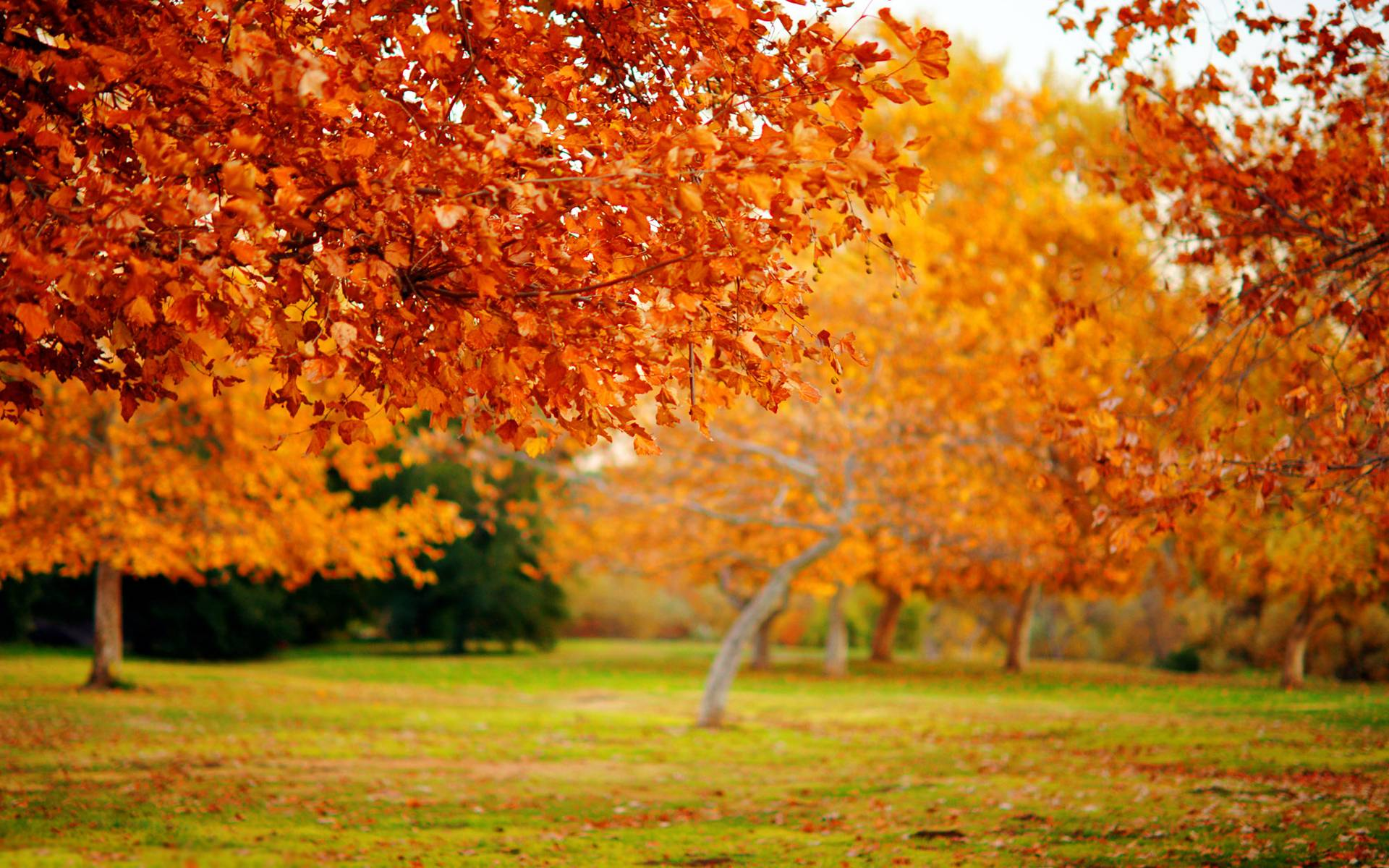 Widescreen Trees Wallpaper