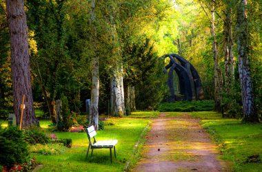Garden Natural Photo