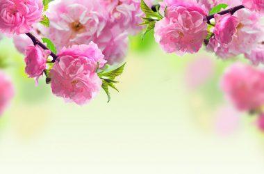Free Spring Wallpaper 25593