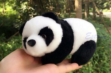 Nice Cute Panda