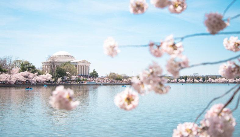 Best Cherry Blossom