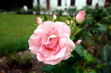 Nice Pink Flower