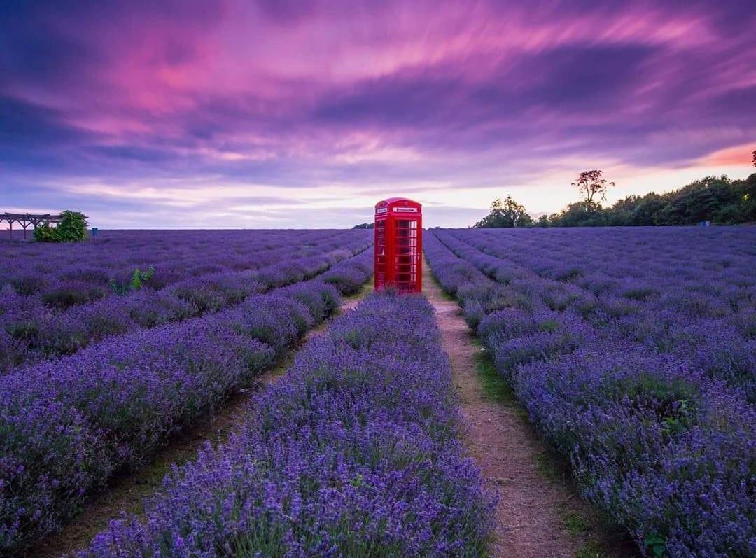Nice Lavender Field