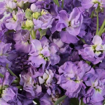 Nice Lavender Flowers