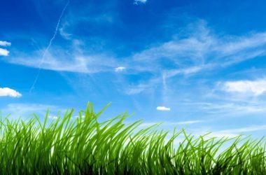 Widescreen Grass Wallpaper 27363