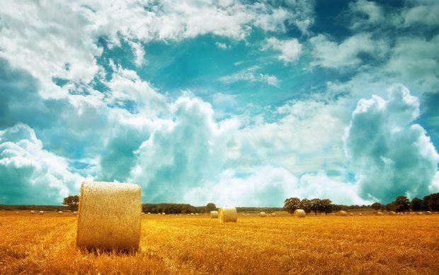 Wonderful Field Wallpaper