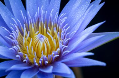 Free Blue Flower