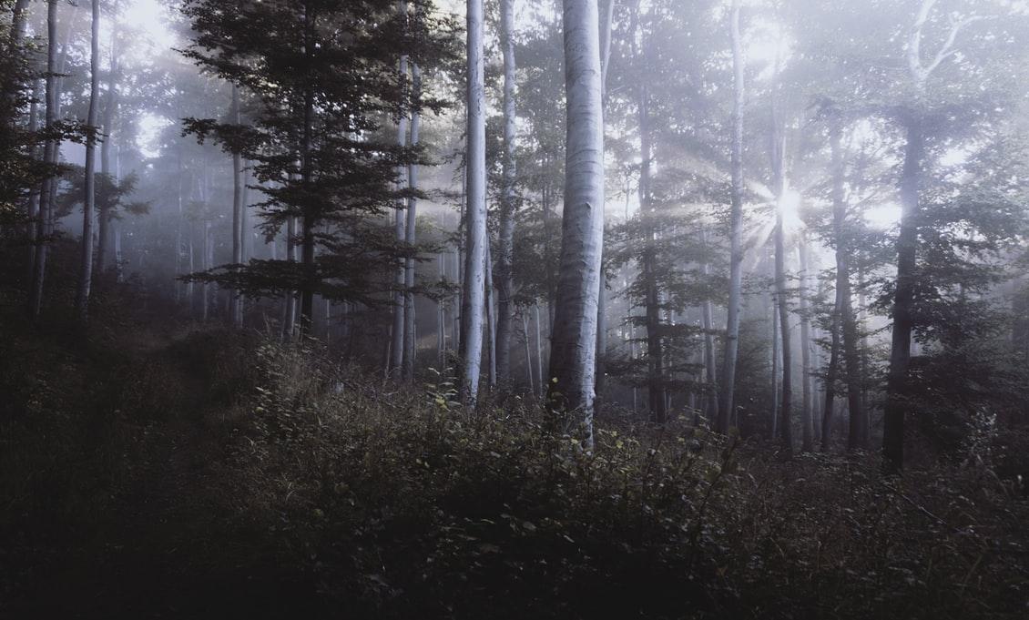 Natural Forest Wallpaper