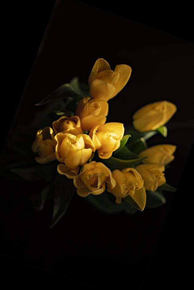 Nice Yellow Tulip