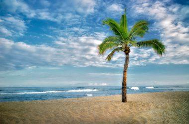 Wonderful Palm Tree