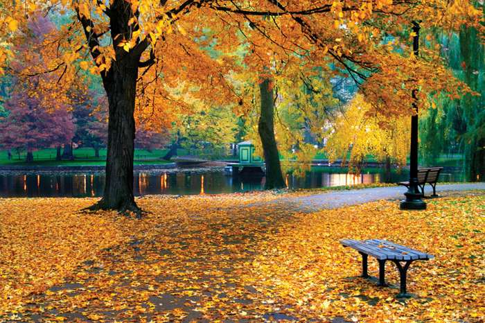 Awesome Fall Season