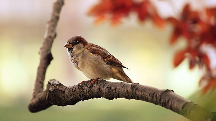 Animal Sparrow Wallpaper