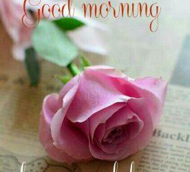 Best Good Morning Image
