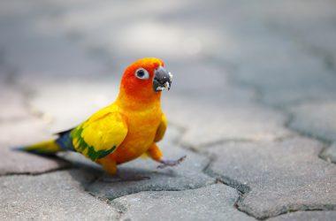 Big Funny Parrot