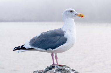 Bird Seagull Image 29987