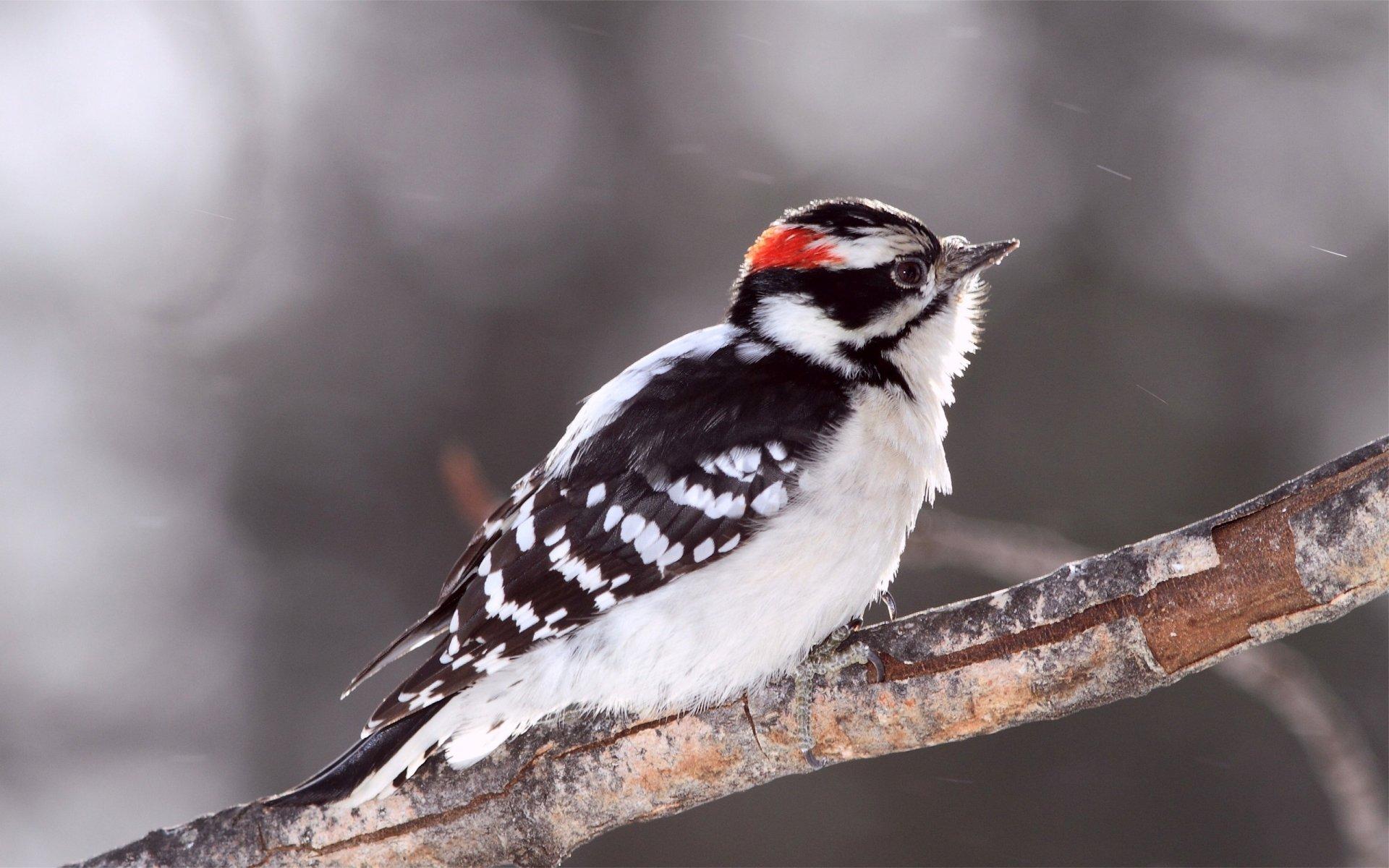 Colorful Woodpecker Wallpaper 30228