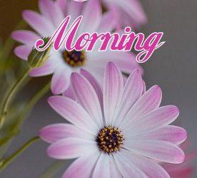 Cool Good Morning Image