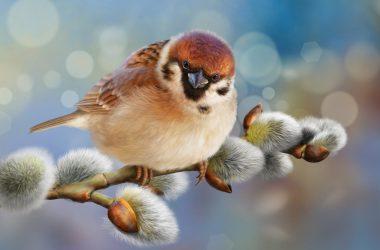 Nice Sparrow Wallpaper 30295