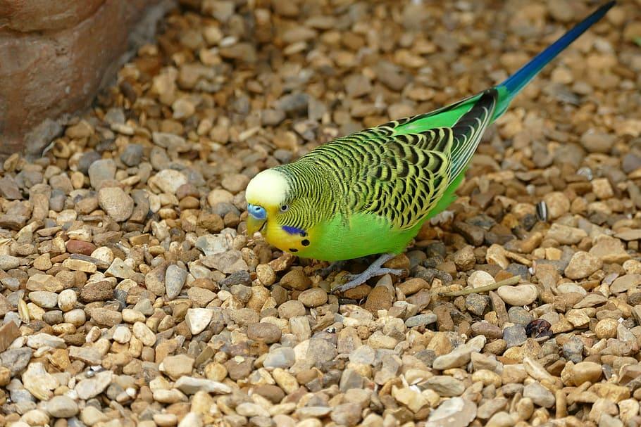 Best Parrot Fish Wallpaper