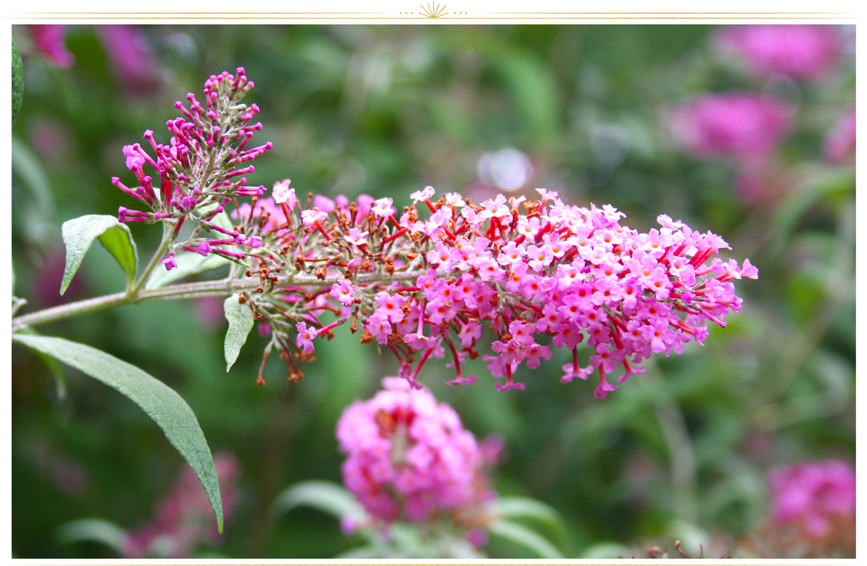 Natural Pink Flower