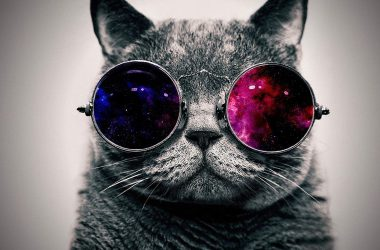 Cat Coolest Wallpaper