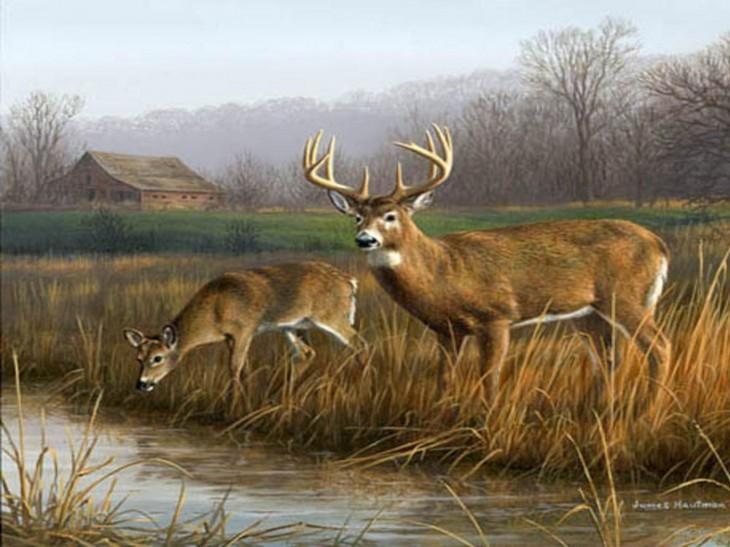 Big Buck Wallpaper 31072