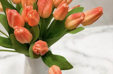 Free Peach Tulip