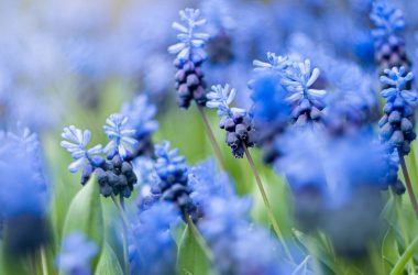 Best Blue Flower